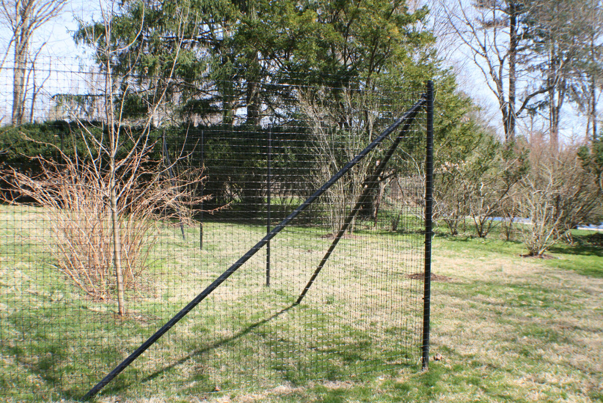 black deer fence around orchard
