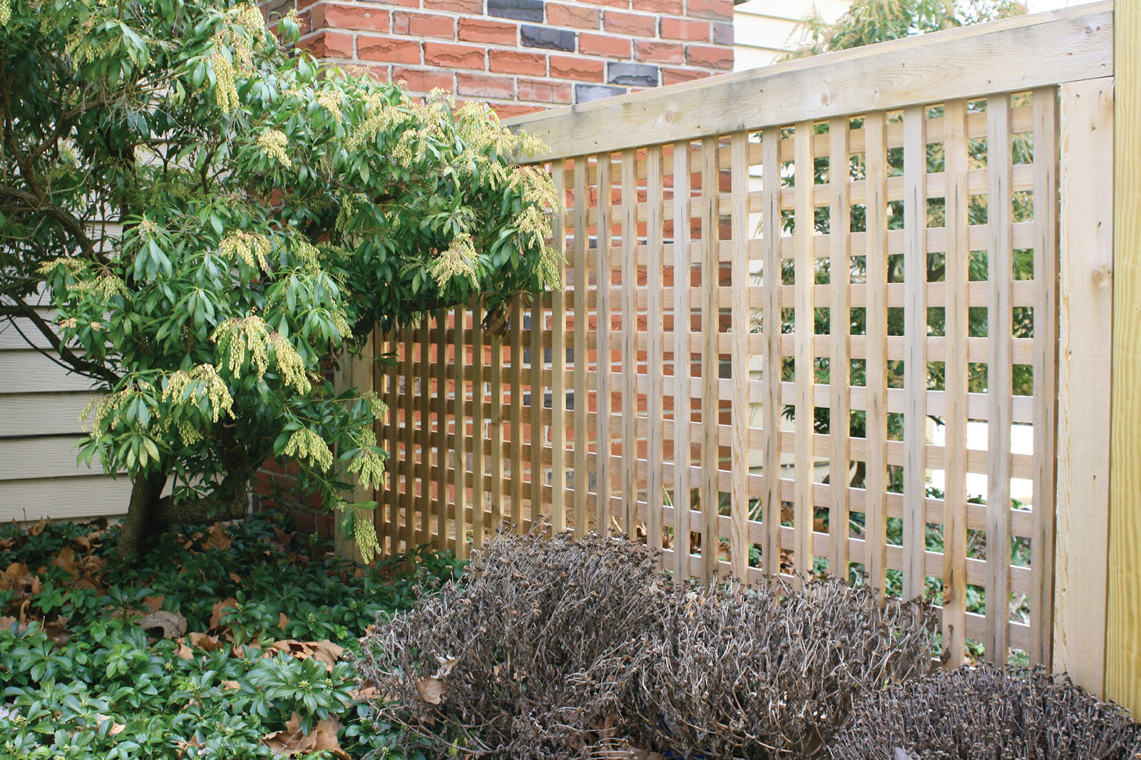 Framed wood lattice fence in yard