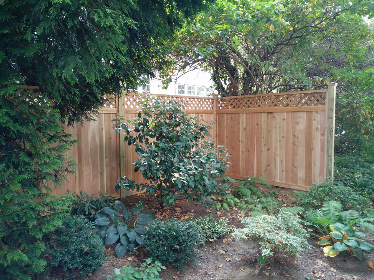 Framed red cedar privacy fence in yard with lattice top