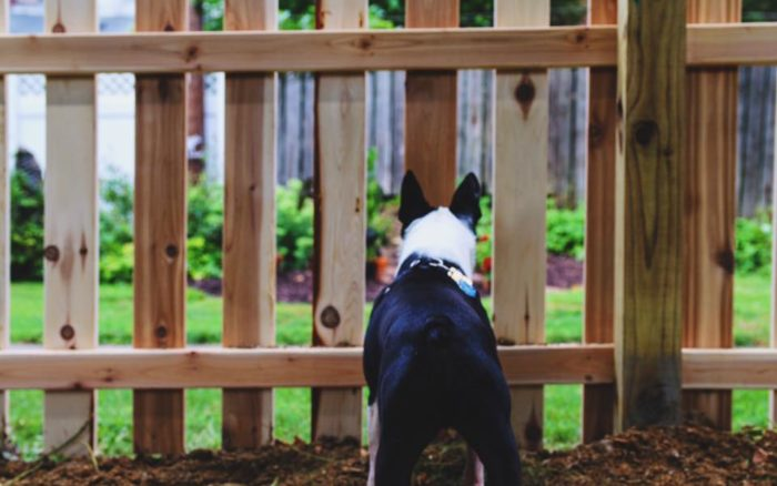 Dog standing at a picket fence